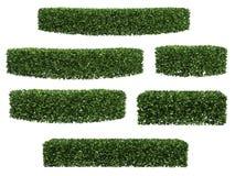 зеленая изгородь иллюстрация вектора