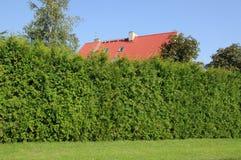 зеленая изгородь стоковые фотографии rf
