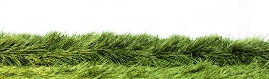 Зеленая изолированная трава Стоковые Изображения RF