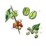 Зеленая иллюстрация кофе Бесплатная Иллюстрация