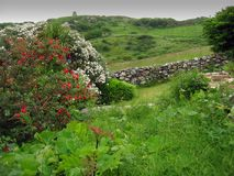 зеленая Ирландия Стоковые Изображения RF