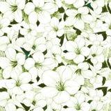 Зеленая и белая абстрактная флористическая предпосылка Стоковые Фотографии RF