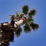 Зеленая и живая пальма в середине оазиса в пустыне Стоковое Изображение