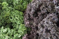 Зеленая и фиолетовая курчавая листовая капуста Стоковое фото RF