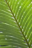 зеленая картина ладони Стоковые Изображения RF