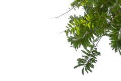 Зеленая картина лист на поверхности с изолированной белой предпосылкой стоковое фото