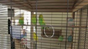 Зеленая клетка попугаев видеоматериал