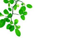 Зеленая конструкция граници листьев Стоковое фото RF