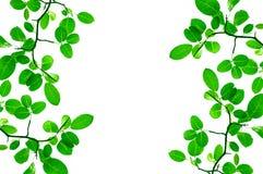 Зеленая конструкция граници листьев Стоковая Фотография