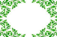 Зеленая конструкция граници листьев Стоковое Изображение