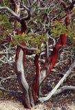 зеленая красная белизна Стоковое Фото