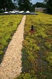 зеленая крыша Стоковые Изображения RF
