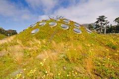 Зеленая крыша na górze урбанского здания стоковые изображения