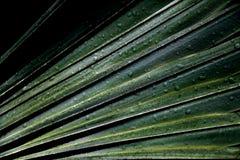 Зеленая ладонь выходит природа с падением дождя Стоковая Фотография RF