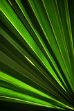 зеленая ладонь листьев Стоковые Изображения