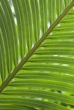 зеленая ладонь Стоковые Фото