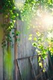 Зеленая листва дерева березы под солнцем на летний день Стоковая Фотография