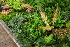 Зеленая лужайка в цветастом благоустраиванном официально саде Стоковые Фотографии RF