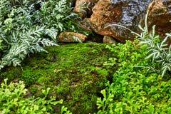 Зеленая лужайка в цветастом благоустраиванном официально саде Стоковое фото RF