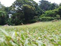 Зеленая лужайка и огромные деревья стоковые изображения