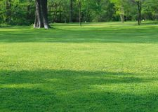 Зеленая лужайка около леса стоковые фото