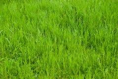 зеленая лужайка Стоковое Фото