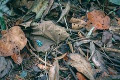 Зеленая лягушка на листьях падения стоковая фотография rf