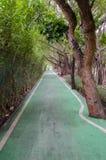 Зеленая майна велосипеда в парке Стоковое Фото