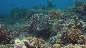 Зеленая морская черепаха 4k акции видеоматериалы