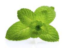 зеленая мята Стоковая Фотография