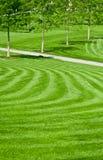 зеленая огромная лужайка Стоковое фото RF