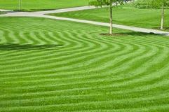 зеленая огромная лужайка Стоковая Фотография RF