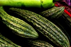 Зеленая органическая горькая дыня для здоровий стоковая фотография rf
