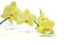 зеленая орхидея макроса Стоковые Фото