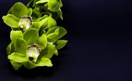 Зеленая орхидея Cymbidium на черной предпосылке стоковые фотографии rf