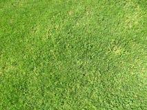 Зеленая отрезанная трава весной Предпосылка зеленой травы футбола или футбольного поля стоковое изображение