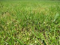 Зеленая отрезанная трава весной Предпосылка зеленой травы футбола или футбольного поля стоковые фото