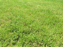 Зеленая отрезанная трава весной Предпосылка зеленой травы футбола или футбольного поля стоковое фото rf