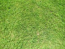 Зеленая отрезанная трава весной Предпосылка зеленой травы футбола или футбольного поля стоковая фотография rf