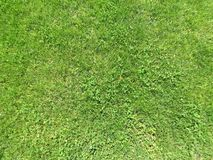 Зеленая отрезанная трава весной Предпосылка зеленой травы футбола или футбольного поля стоковые изображения rf