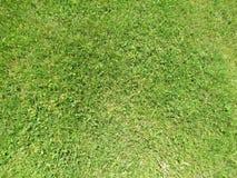 Зеленая отрезанная трава весной Предпосылка зеленой травы футбола или футбольного поля стоковое изображение rf