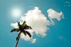 Зеленая пальма Стоковые Изображения RF
