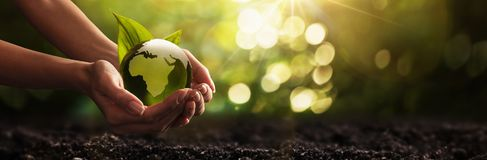 Зеленая планета в ваших руках окружающая среда принципиальной схемы внимательности предпосылки изолировала малую белизну вала взя Стоковые Фотографии RF