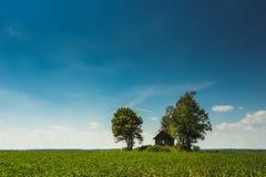 Зеленая плантация с небольшим домом и голубым небом стоковое изображение rf