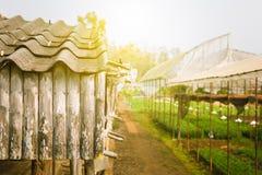 Зеленая плитка крыши стоковые фотографии rf