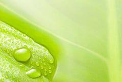 зеленая поверхностная вода листьев Стоковые Изображения