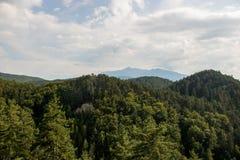 Зеленая предпосылка леса дерева на suny день стоковые фото