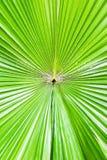 Зеленая предпосылка листьев ладони Стоковые Фотографии RF