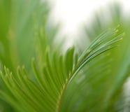 Зеленая предпосылка листьев Стоковое фото RF