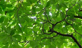 Зеленая предпосылка лист для абстрактной предпосылки Стоковое Фото